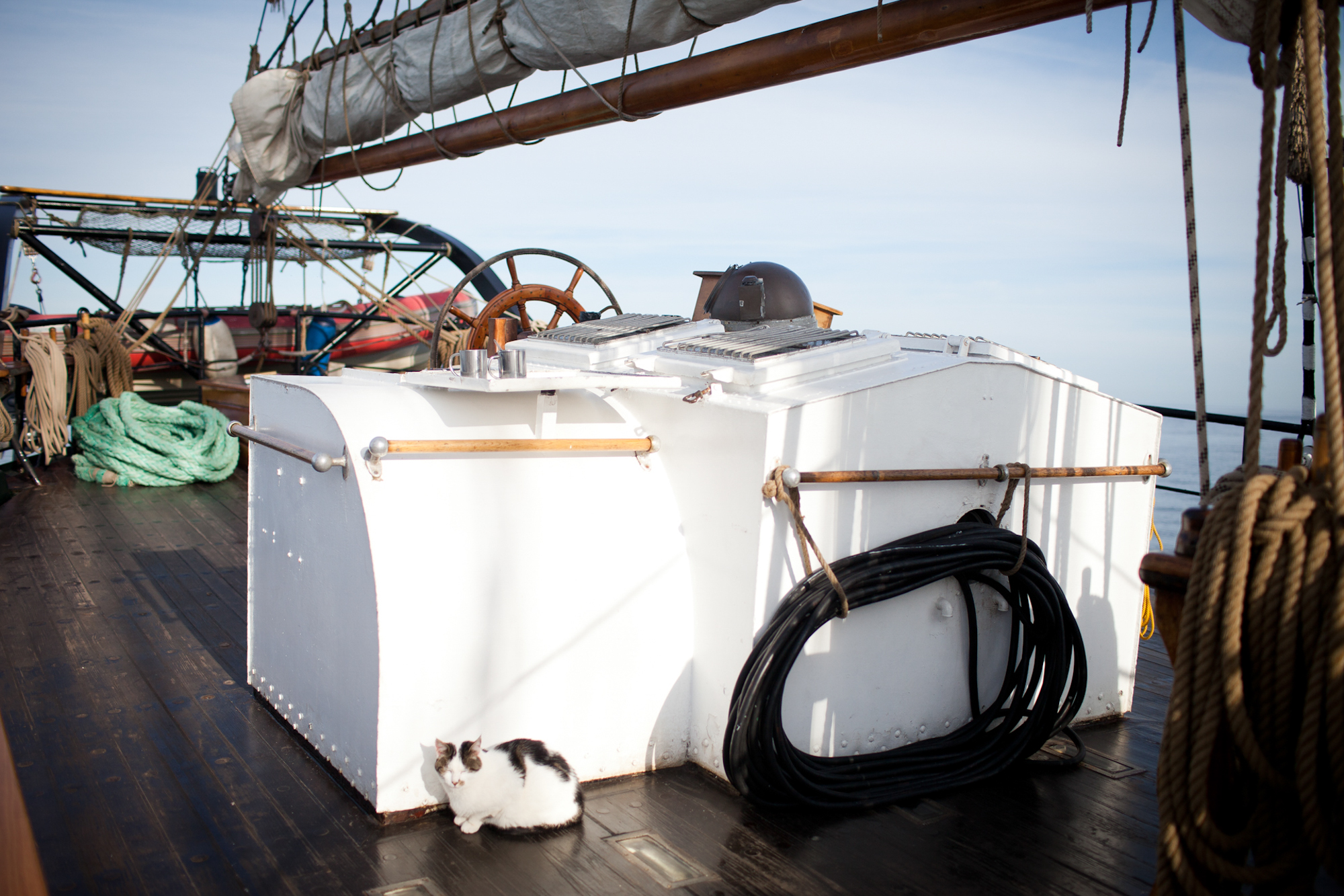 Die Katze gehoert zum Inventar des Schiffes. Sie befindet sich auf dem Bild am Achterdeck des Schiffes. Charlotte Strauss auf dem Schiff Fridjof Nanson wo sie ihren Ausbildungsturn om 31. 7 bis 5. 8 absolviert. Fotograf: Evi Lemberger